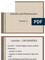 Amoeba and Paramecium