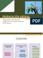 Propagacion Asexual
