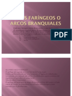 16340555 Arcos Faringeos o Arcos Branquiales Maria Cordoba Lopez
