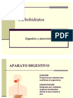 Digestion y Absorcion de Carbohidrato