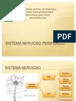 Sistema nervisos periferico