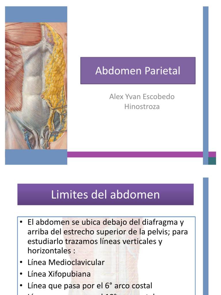 Anatomia de Abdomen : Abdomen Parietal