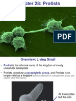 Chapter 28 Protists