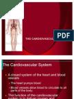 Cardio Slides