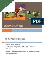 Sistem krava tele