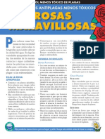 Roses Spanish 09