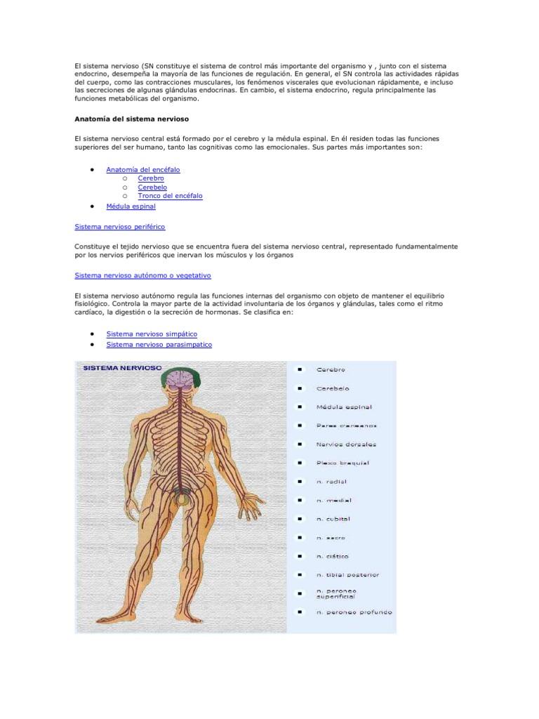 El Sistema Nervioso Anexo