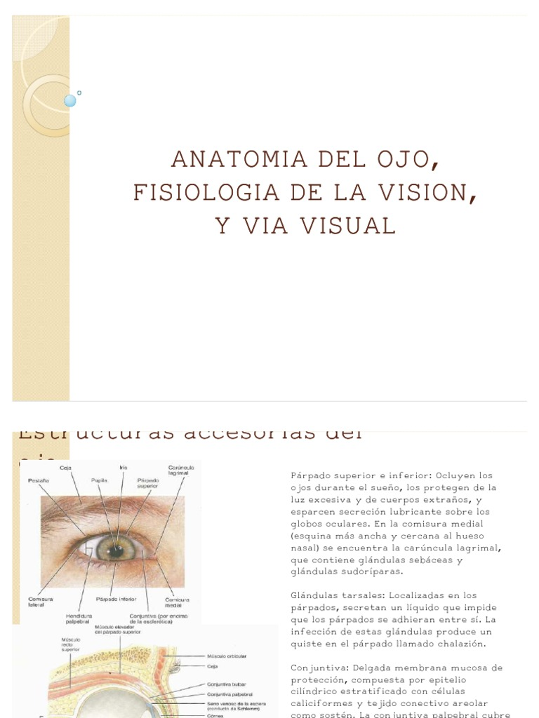 ANATOMIA DEL OJO,Via Visual, Fisiologia de La Vision