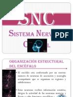 SNC CLASE