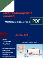 22007536-ECG-curs-1