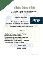 Biología V - Práctica de Enzima en el Hígado