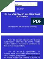 3- LEI DA SEGREGAÇÃO INDEPENDENTE DOS GENES