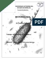 Generalidades Bacterias