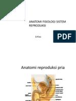 Anatomi Fisiologi Sistem Reproduksi