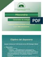 10_mitocondria_e_cortes