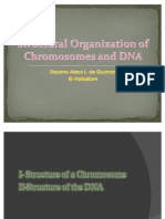 Structural Organization of Chromosomes and DNA