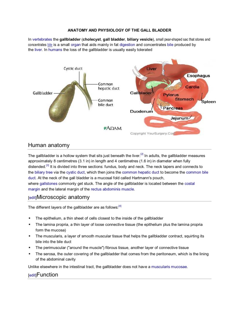 Anatomy and Physiology of the Gall Bladder
