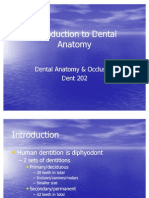 Introduction to Dental Anatomy
