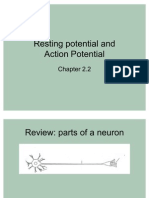 Resting Potential and Action Potential