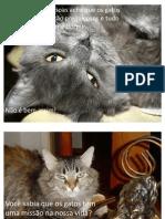 gatos e seus mistérios- lindo