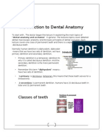 Intro to Dental Anatomy