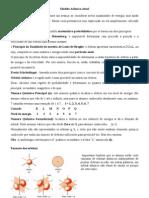 Modelo_Atômico_Atual_Hund,_DeBroglie...