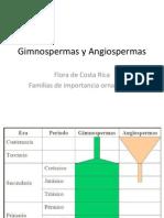 Gimnospermas y Angiospermas