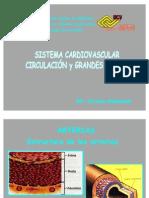 Circulatorio II