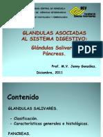 Glandulas Salivares y Pancreas - Copia
