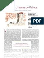 CV8 Colonias Urbanas Felinas