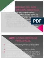 Desarrollo Del Adn Como Material Genetico.