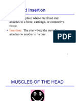 Label Muscles for Spreadsheet