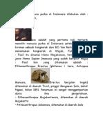 Penelitian Manusia Purba Di Indonesia Dilakukan Oleh