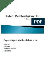 Sistem Pembentukan Urin