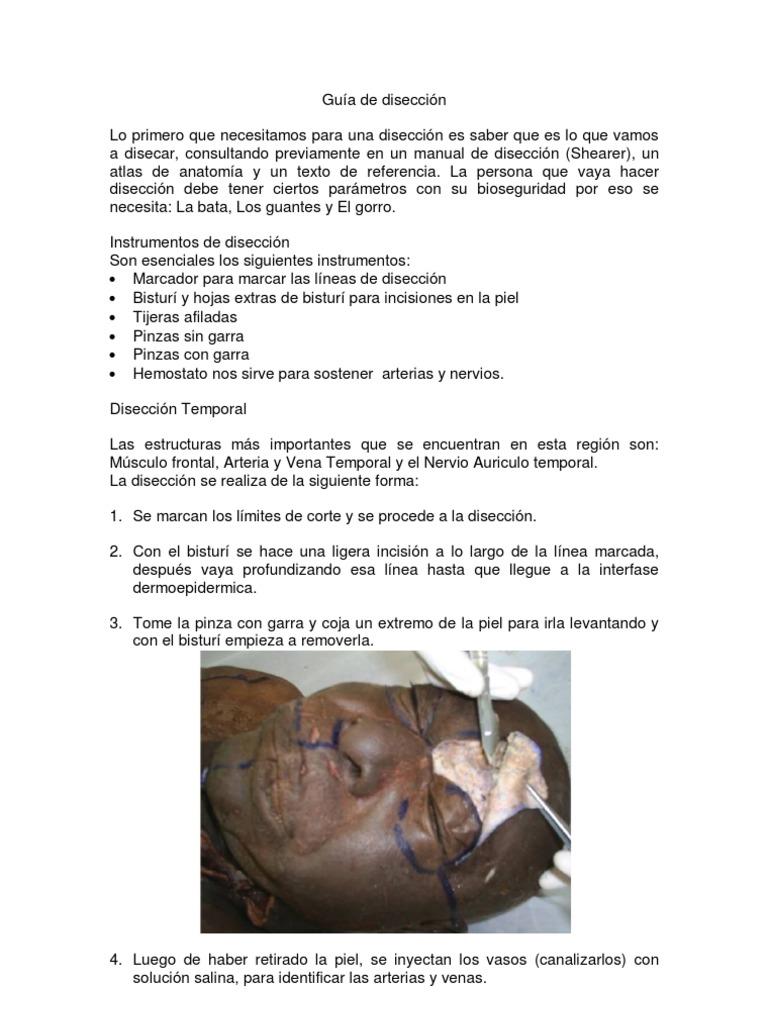 Asombroso Anatomía Sin Bisturí Ilustración - Anatomía de Las ...