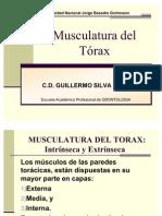 1 - Musculatura Del Torax