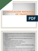 Circulacion Neonatal de Transicion