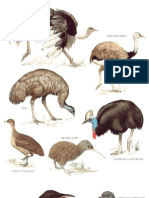 Longman's Illustrated Animal Encyclopedia