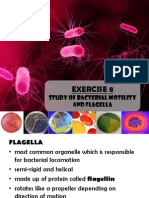 Exercise 8 Bacterial Motility and Flagella