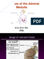 Hormones of the Adrenal Medulla for Labcon