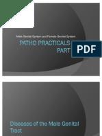 Patho Practicals 3 Part 2