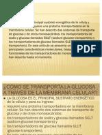 Como Se Transport A Las Glucosas_2010
