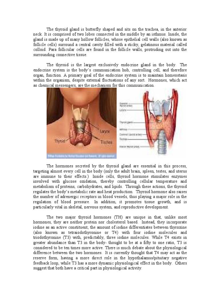 Thyroid Thyroid Thyroid Stimulating Hormone