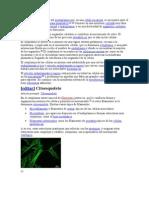 Citoplasma y Carioplasma