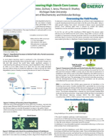 Engineering High Starch Corn Leaves - Poster