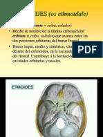 Etmoides