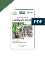 070813 PROPAGACION DE PIÑON