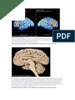 Brain Activity in Memory