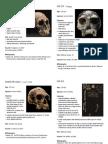 H. Habilis & Early Homo Specimens