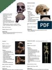 Homo Ergaster & Homo Erectus Specimens
